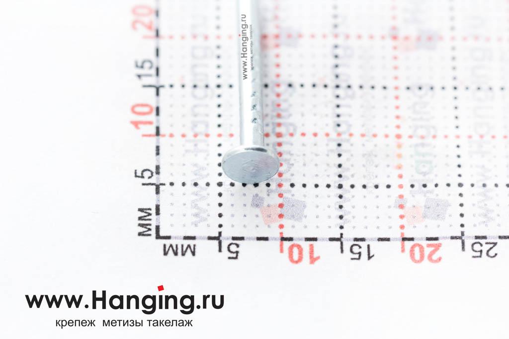 Шляпка (головка) гвоздя толевого оцинкованного 2*20 ГОСТ 4029-63